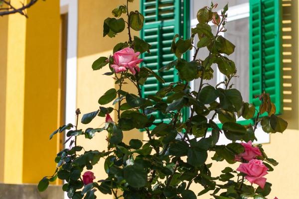 apartments-meri-martinscica926EFEA2F2-F6CE-450D-A109-5FACEA05DCF8.jpg